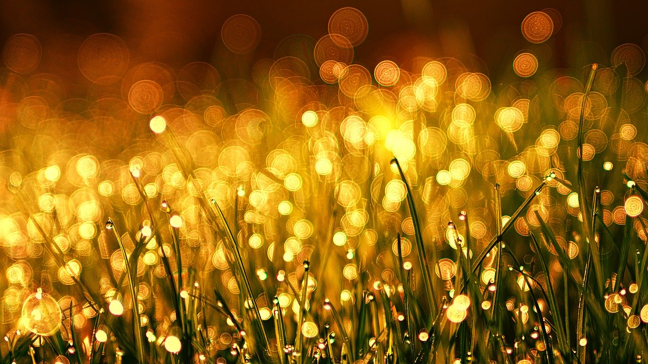 Focus on the Golden Light of Dew on the Grass