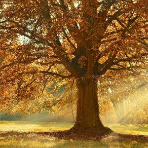 Sunrays shining through the tree.